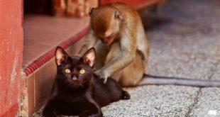 Кто вы - крот, курица, обезьяна или кот