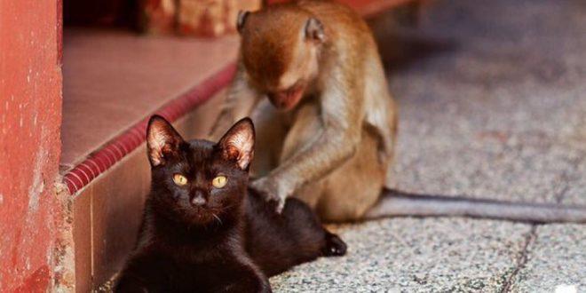 Кто вы — крот, курица, обезьяна или кот?