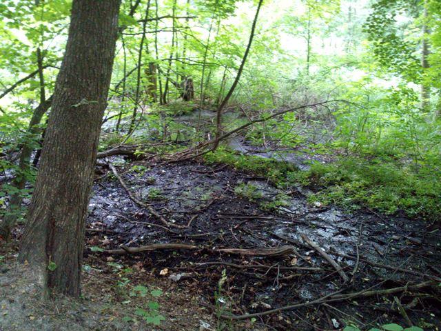 Юбилей: 2 месяца прогулок и поворот в болото