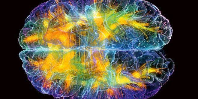 Немного о мозге: 7 фактов, которые изменят вашу жизнь