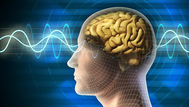 7 фактов о мозге