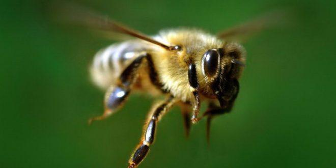 Меня покусали рабочие пчелы