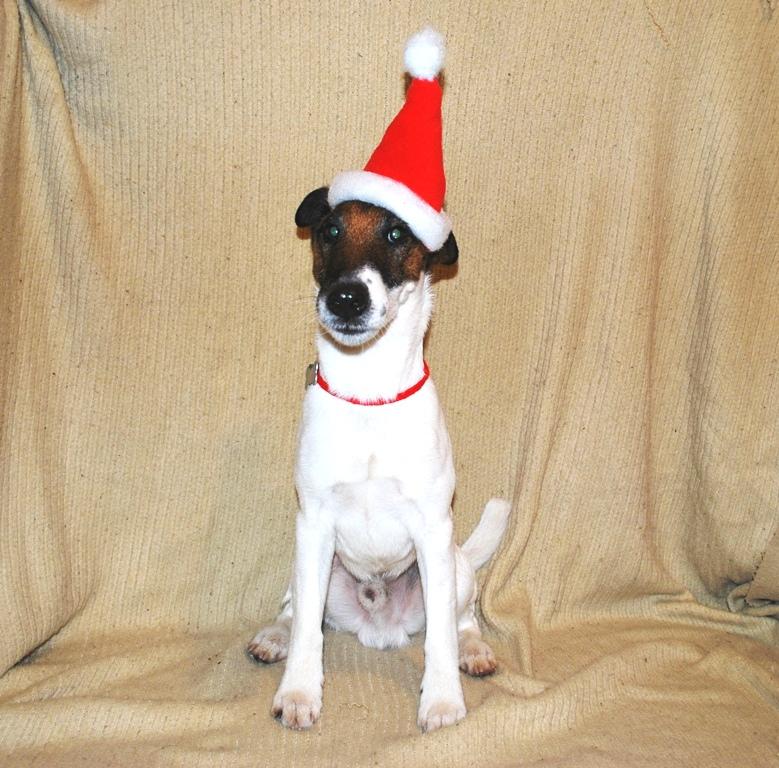Шапочка Деда Мороза для собаки