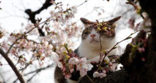 Чётки-челлендж Весна. День 1