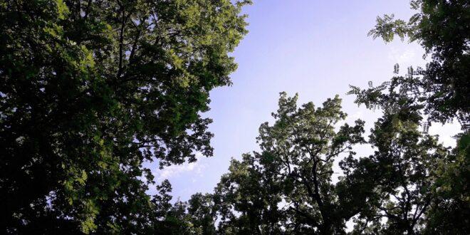 Бессериалье и шаги #ЧЧ Лето, день 25