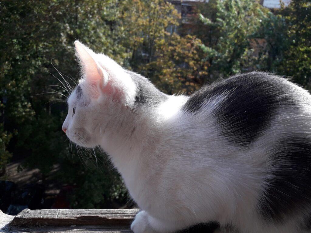 Курорт и дача (кошачьи) #ЧЧ Лето, день 87