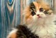 Внутренняя кошка #ЧЧ Осень, день 32