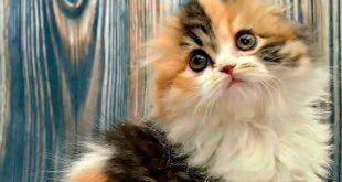 Кицаца - моя внутренняя кошка