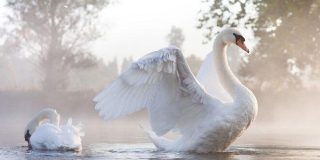 Птички: серая, белая, черная и чокнутая